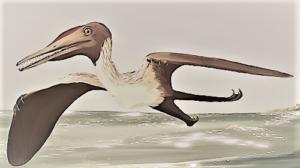 プテロダクティルス   恐竜マンblog
